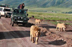 Tanzania safari trips